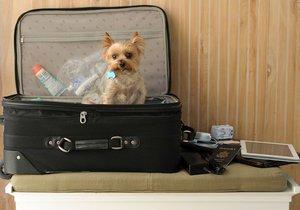 krádež na dovolené