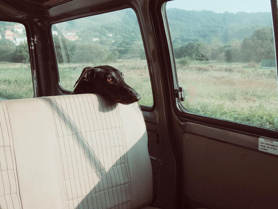 Cestovní pojištění pro psa - konečný obrázek
