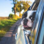 Cestovní pojištění pro psa - náhledový obrázek
