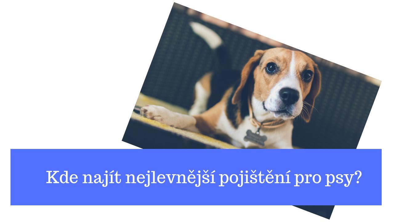 kalkulačka pojištění pro psy